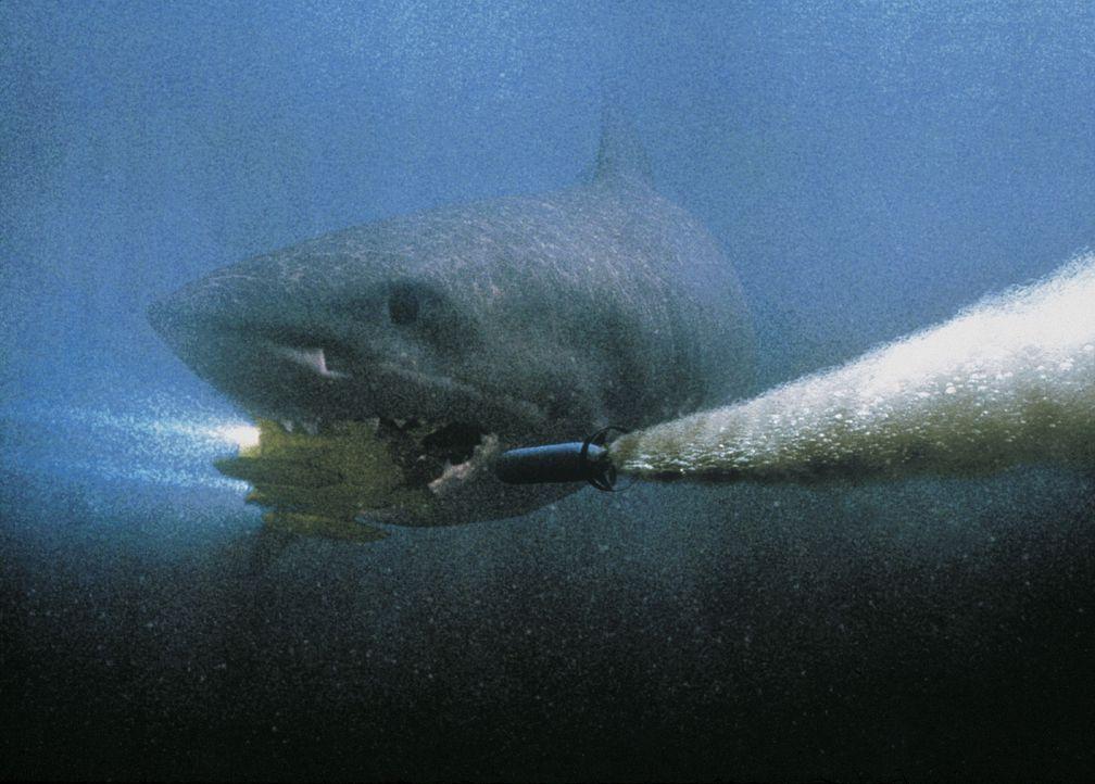 Mittels Torpedo soll dem Monster-Hai der Garaus gemacht werden ... - Bildquelle: Nu Image