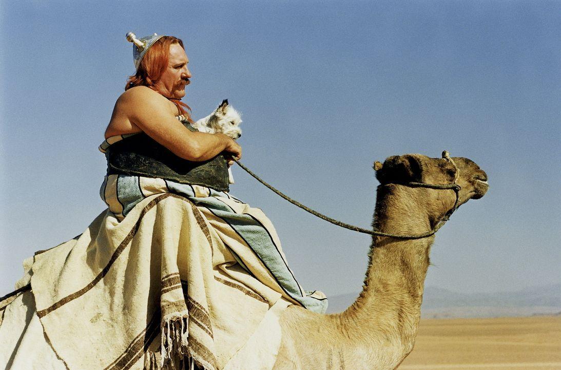 Cleopatra hat eine Geheimwaffe in petto: die Experten (Gerald Depardieu) aus einem kleinen gallischen Dorf ... - Bildquelle: Tobis StudioCanal