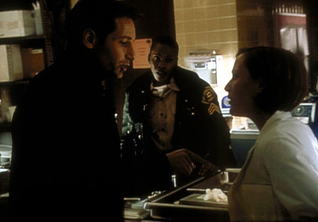 Mulder (David Duchovny, l.) und Scully (Gillian Anderson, r.) sind überzeugt davon, dass in Willow Park ein Wesen umhergeht, das sich von den Todesä... - Bildquelle: TM +   2000 Twentieth Century Fox Film Corporation. All Rights Reserved.