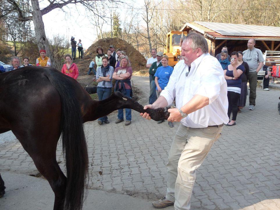 Sein Ruf eilt ihm voraus, und die Schlange in seinen Sprechstunden auf dem heimischen Hof in Filsum reißt nicht ab: Pferdeflüsterer Tamme Hanken ... - Bildquelle: SAT.1