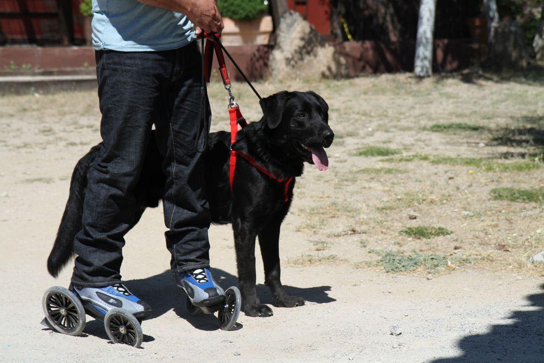 Cesar Millan: Auf den Hund gekommen auf Rollschuhen - Bildquelle: © 360 Powwow, LLC / Belén Ruiz Lanzas