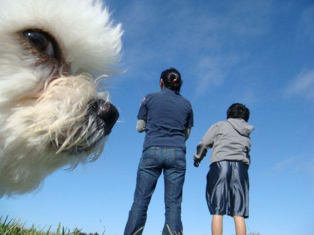 Ein Riesenhund - Bildquelle: cephaloGeek/imgur.com/buzzfeed.com