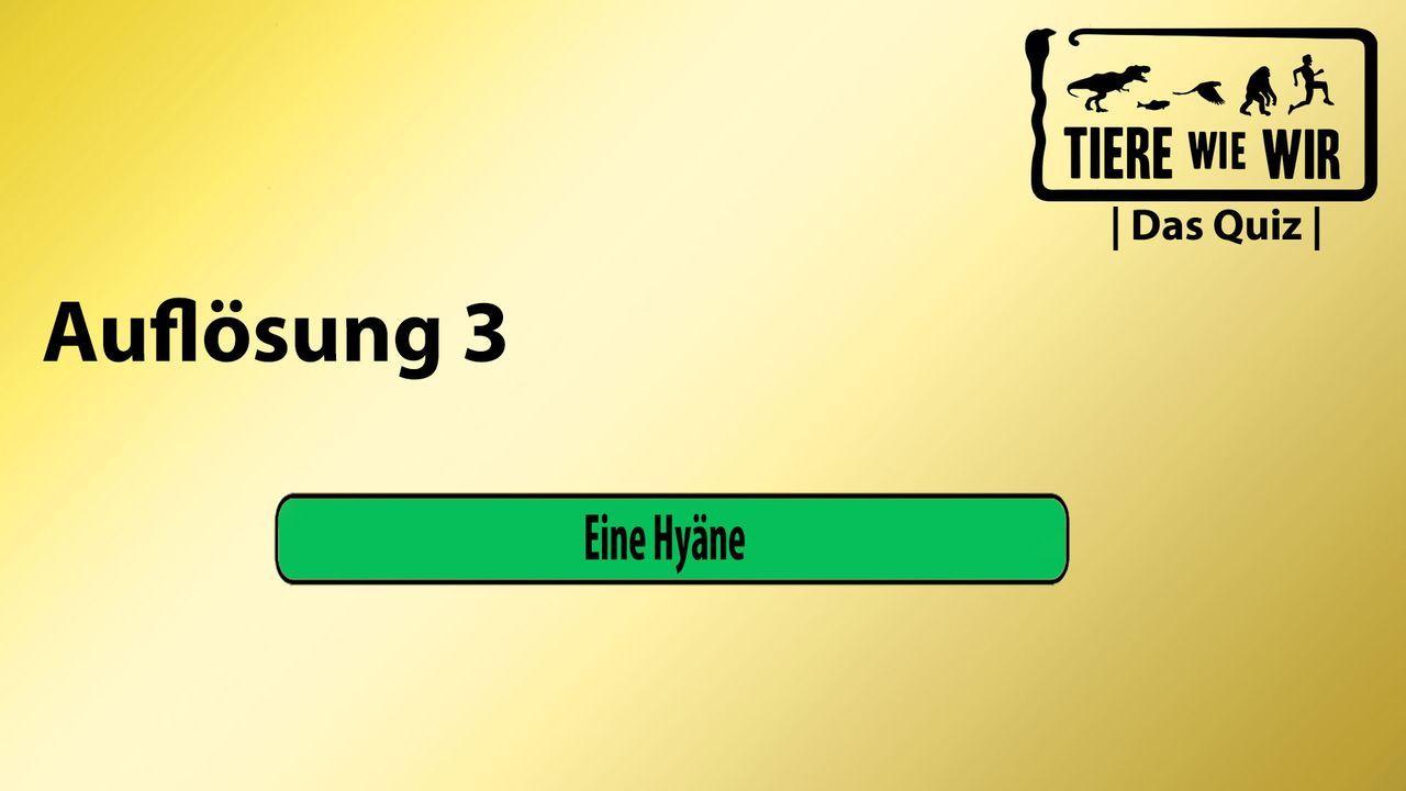 3_Auflösung_Hyäne_Audio