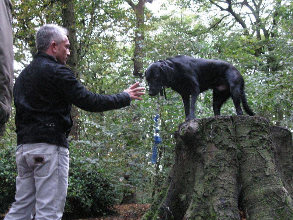 Cesar kümmert sich heute um drei tierische Problemkinder aus Großbritannien ... - Bildquelle: Ryan Cass MPH - Emery/Sumner Joint Venture