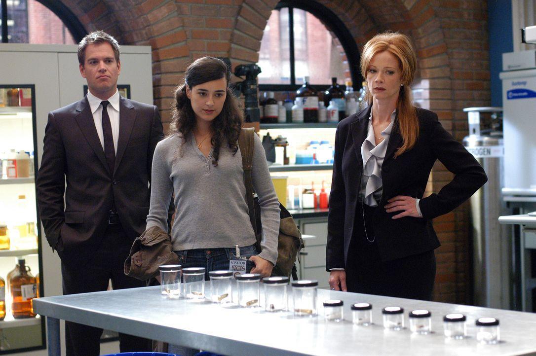 Wird Ziva (Cote de Pablo, M.) Gibbs (Mark Harmon, l.) und Jenny Shepard (Lauren Holly, r.) helfen Ari zu fassen? - Bildquelle: TM &   2006 CBS Studios Inc. All Rights Reserved.