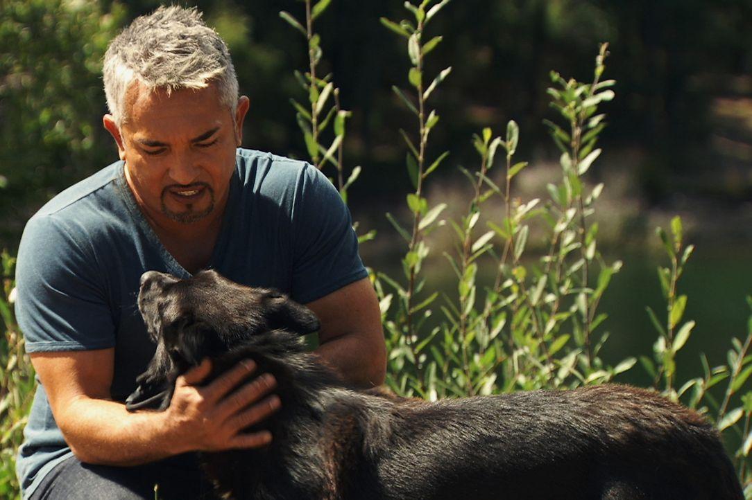 Cesar gibt keinen Hund auf, auch für Turbo hat er ein besonderes Training vorbereitet ... - Bildquelle: Belén Ruiz Lanzas 360 Powwow, LLC / Belén Ruiz Lanzas