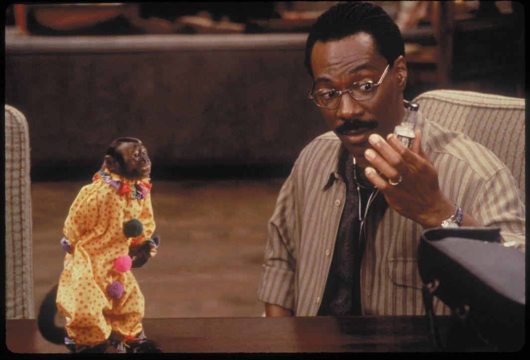 Dr. Dolittle (Eddie Murphy) im angeregten Gespräch mit einem Äffchen ... - Bildquelle: 1998 Twentieth Century Fox Film Corporation. All rights reserved.