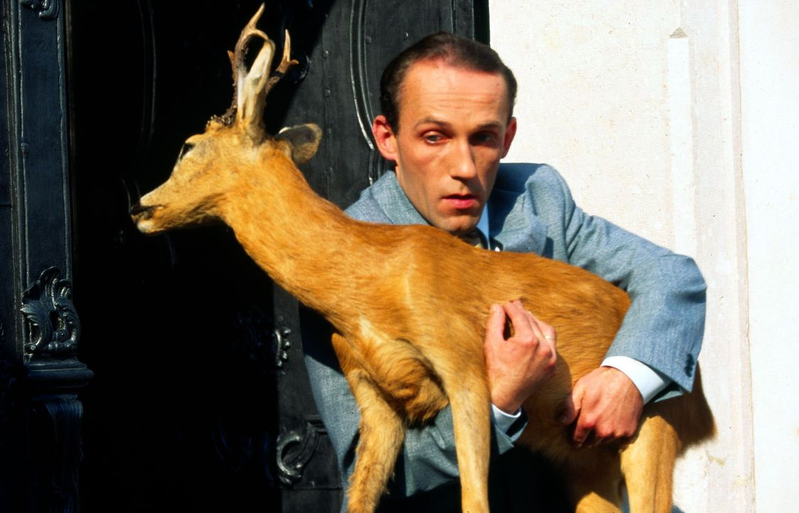 Stockinger (Karl Markovics) entdeckt in Fehlings Wohnung viele Jagdtrophäen. Kurzerhand beschlagnahmt er einen ausgestopften Rehbock ... - Bildquelle: Huber Sat.1