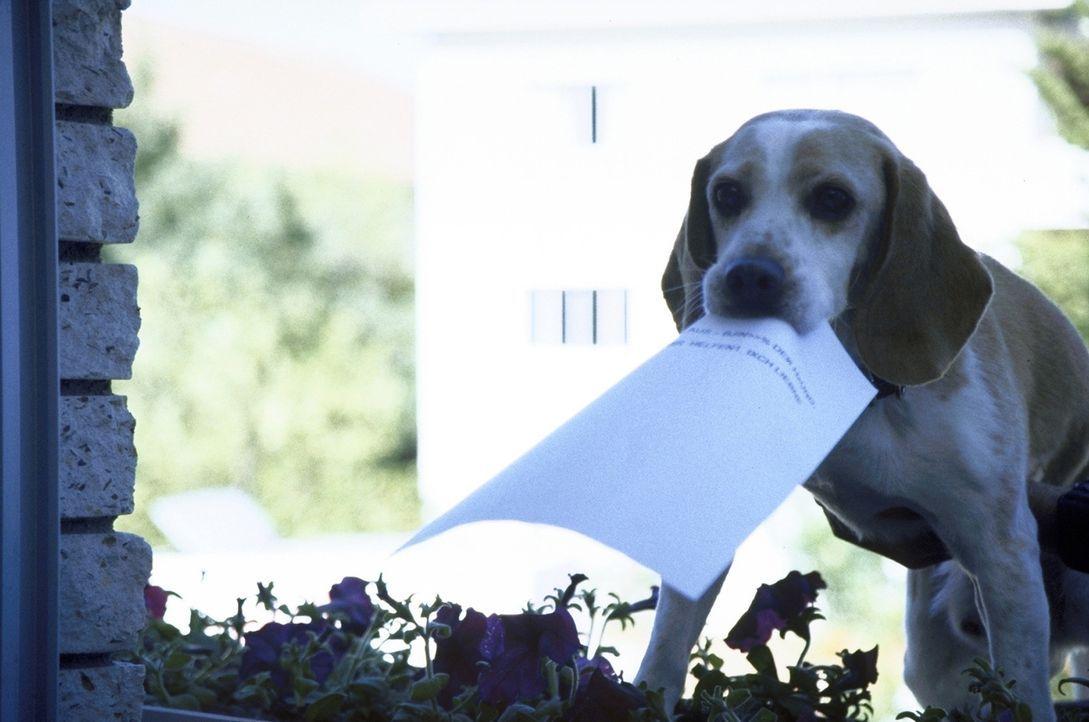 """""""Hier dürfen wir nicht rein!"""": Klaus-der-Hund will um jeden Preis seinen Prozess gewinnen, deshalb versucht er verzweifelt, mit dem Ergebnis des Gen... - Bildquelle: Boris Guderjahn ProSieben"""