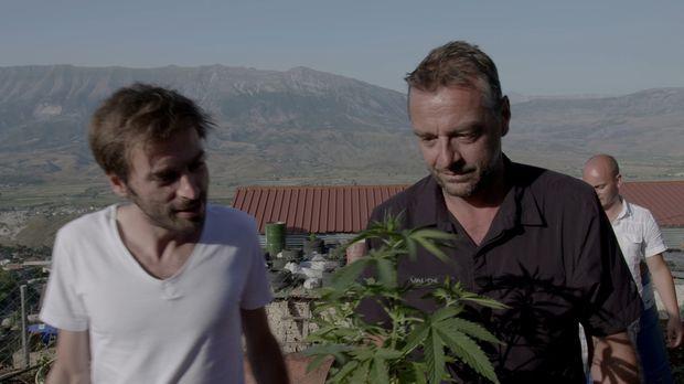 Albaniens dunklere Seite: Marihuana soweit das Auge reicht: Tom Waes (r.) ent...