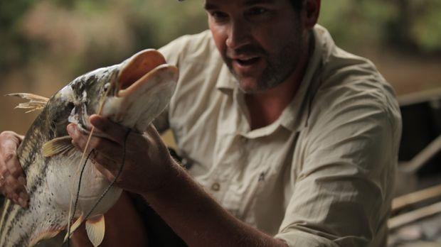 Dr. Zeb Hogan macht sich auf die Jagd nach einem großen Raubfisch, einem Giga...
