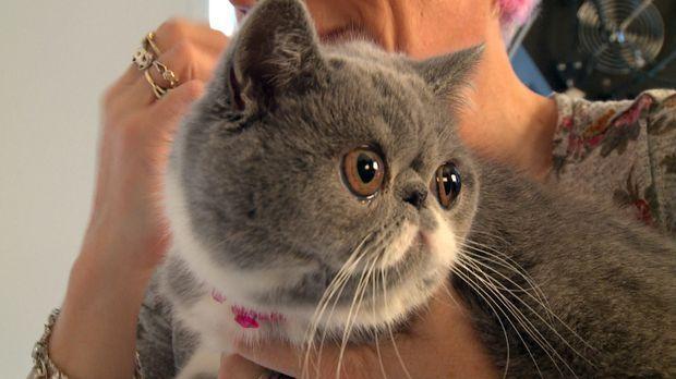 Das Internet machte Grumpy Cat zum Star. Jetzt ist die missgelaunte Katze die...