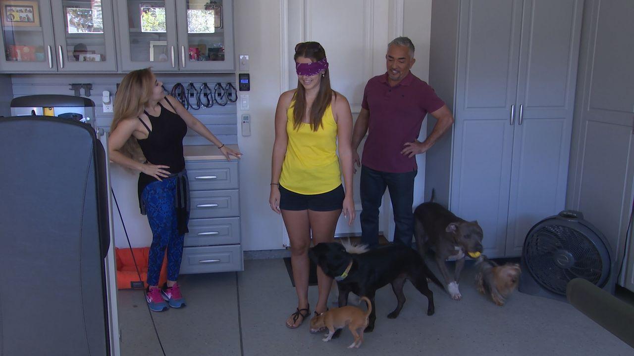 Cesar (r.) wird von einem verzweifelten Elternpaar gerufen, die nicht mehr mit ansehen können, wie der Pitbull Mischling Ivy ihrer Tochter immer wie... - Bildquelle: NGC/ ITV Studios Ltd