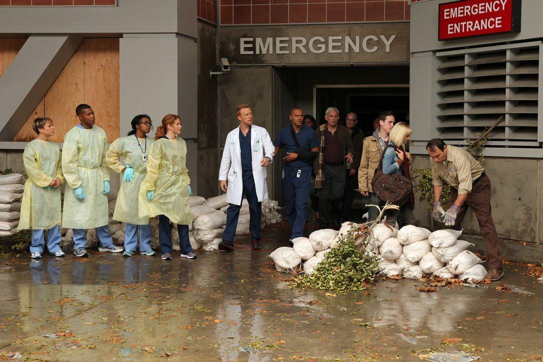 Nachdem sich das heftige Unwetter gelegt hat, können die jungen Ärzte Heather (Tina Majorino, l.), Shane (Gaius Charles, 2.v.l.), Stephanie (Jerrika... - Bildquelle: ABC Studios