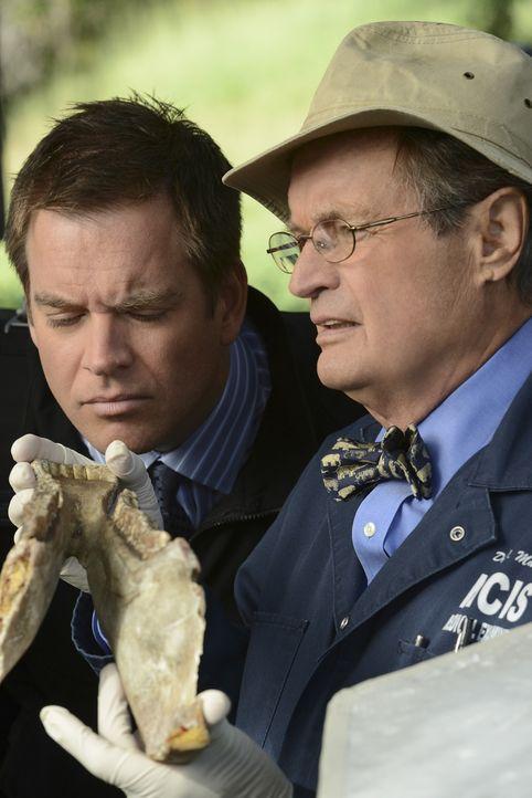 Bei den Ermittlungen: DiNozzo (Michael Weatherly, l.) und Ducky (David McCallum, r.) ... - Bildquelle: CBS Television