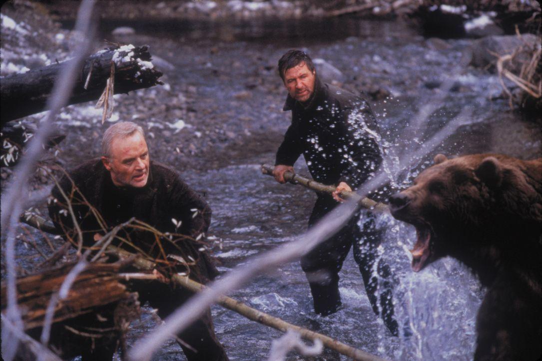 Noch vor wenigen Tagen kämpften sie gegeneinander um die Gunst einer Frau - jetzt sind sie vereint im Kampf auf Leben und Tod gegen einen Kodiak-Bär... - Bildquelle: kabel eins