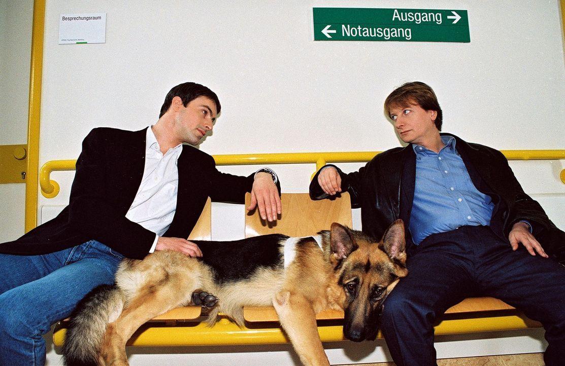 Kommissar Brandtner (Gedeon Burkhard, l.), Rex und Böck (Heinz Weixelbraun, r.) warten im Krankenhaus, um ein Verhör durchzuführen. - Bildquelle: Sat.1