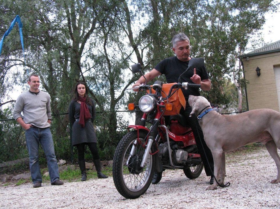 Morgan und Amanda Roche sind von Irland nach Australien ausgewandert. Mit an Bord war ihr geliebter Weimeraner Sidney. Der Hund hatte gleich zu Begi... - Bildquelle: 2014 Rive Gauche Television. All rights reserved.
