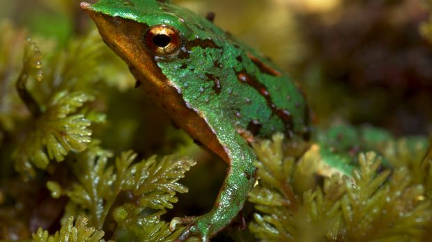 Der britische Tierforscher und -filmer Sir David Attenborough zeigt besondere...