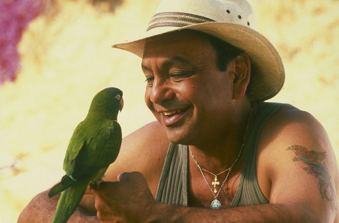 Auf der hoffnungslosen Suche nach seiner besten Freundin stößt der kluge Papagei Paulie (l.) auf den Straßenverkäufer Ignacio (Cheech Marin, r.). Di... - Bildquelle: TM &   (1998) DREAMWORKS LLC. ALL RIGHTS RESERVED.