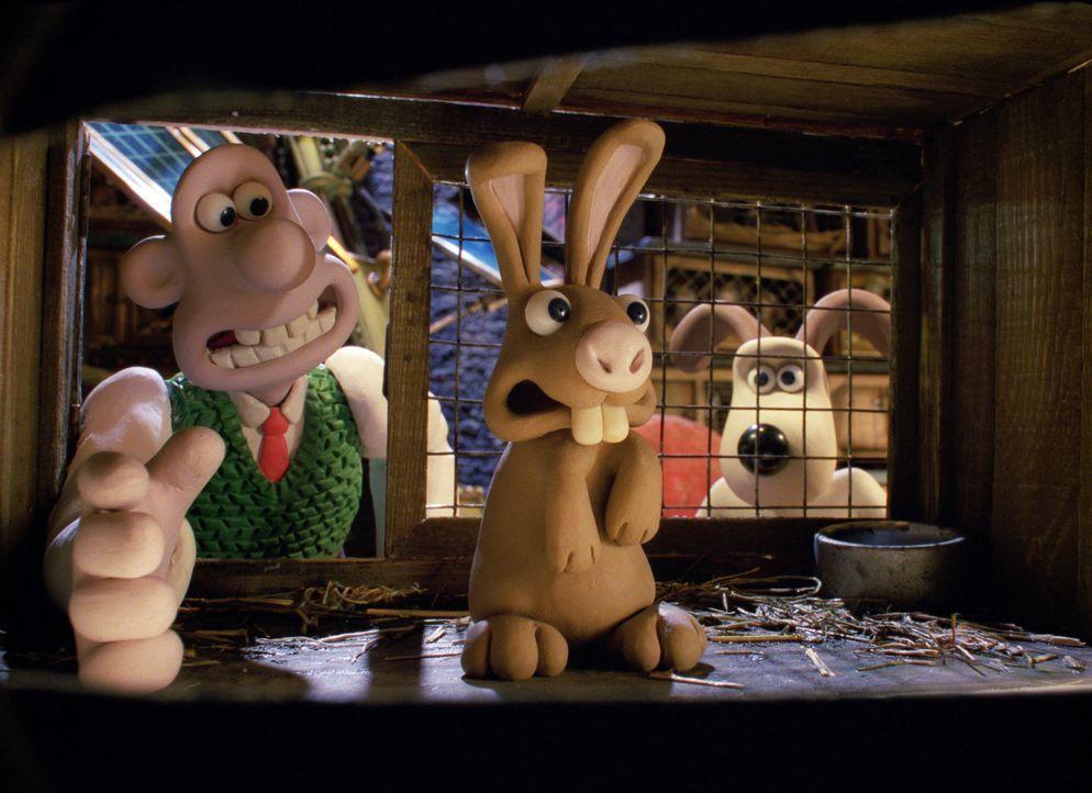 Was tun, wenn Kaninchen zur Plage werden? Der pfiffige Erfinder Wallace (l.) und sein Hund Gromit (r.) haben bereits einen Plan ... - Bildquelle: Telepool GmbH