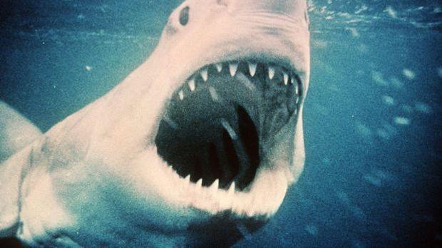 Blockbuster-Regisseur Steven Spielberg wird 65. Kein anderer hat das Kino der...