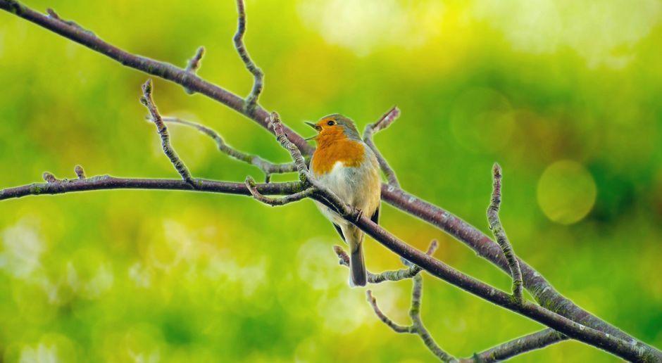 Gartendeko Selbst Gemacht Ideen Und Tipps Sat 1 Ratgeber