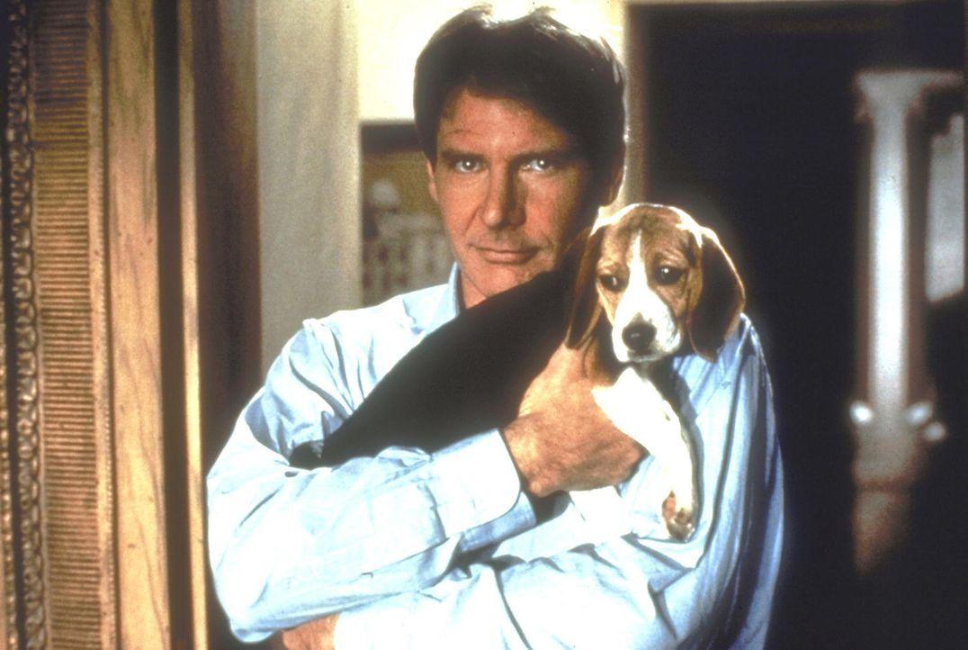 Durch eine Schusswunde am Kopf hat der einst sehr erfolgreiche Anwalt Henry Turner (Harrison Ford) sein Gedächtnis verloren. Unterstützt von seiner... - Bildquelle: United International Pictures