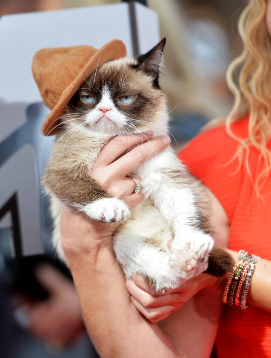 MTV-Movie-Awards-Grumpy-Cat-140313-getty-AFP - Bildquelle: getty-AFP
