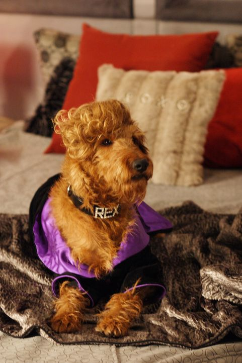 Aufgrund seiner außergewöhnlichen Talente hat Rexx in Hollywood Karriere gemacht ... - Bildquelle: New Regency Productions, Inc.