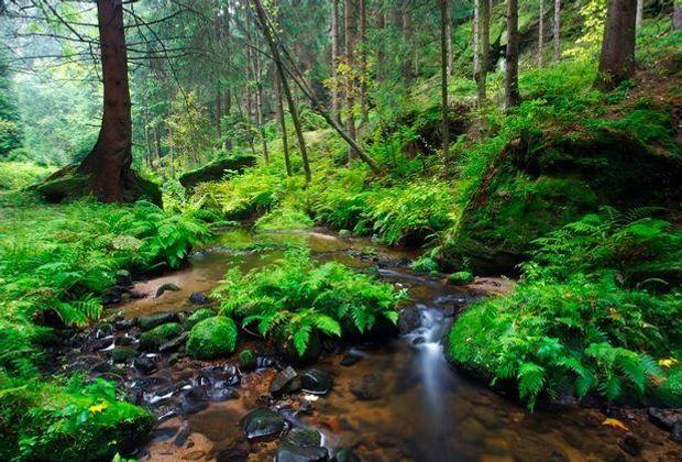 Wald spezial