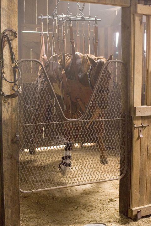 Die kleine Cale setzt alles daran der verletzten Stute Sonya wieder auf die Beine zu helfen. - Bildquelle: Epsilon Motion Pictures