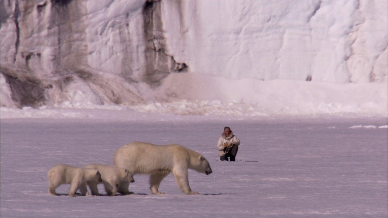 Gordon Buchanan begleitet eine wilde Eisbärenfamilie über weite Distanzen durch Schnee und Eis der Svalbard Inseln und gewinnt dabei einmalige Einbl... - Bildquelle: BBC
