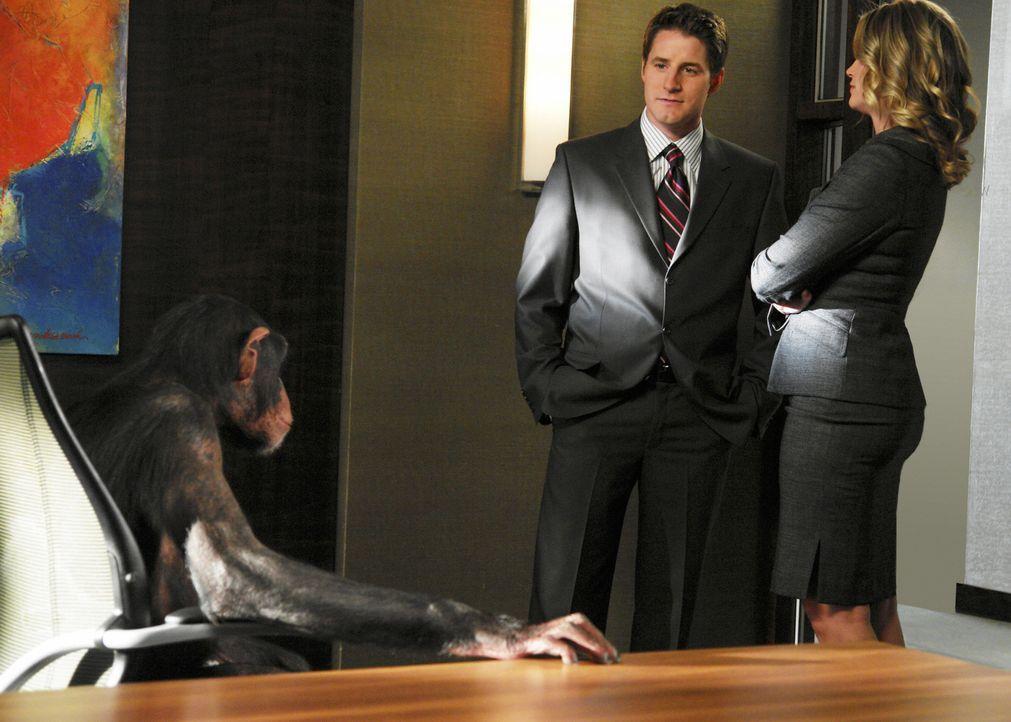 Matt (Sam Jaeger, l.) kann Taylor (Natasha Henstridge, r.) dazu überreden, einen wahrlich ungewöhnlichen Fall zu übernehmen. Es geht um zwei Schimpa... - Bildquelle: Disney - ABC International Television