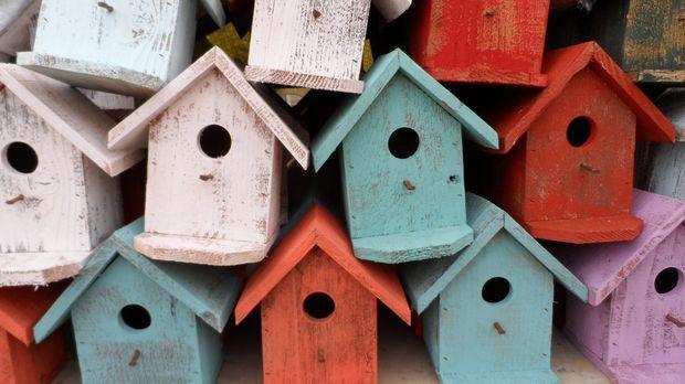Vogelhaus selber bauen sat 1 ratgeber for Ratgeber bauen