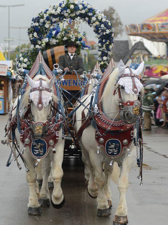 Oktoberfest-12-09-22-Einzug-Kutsche-dpa - Bildquelle: picture alliance / dpa
