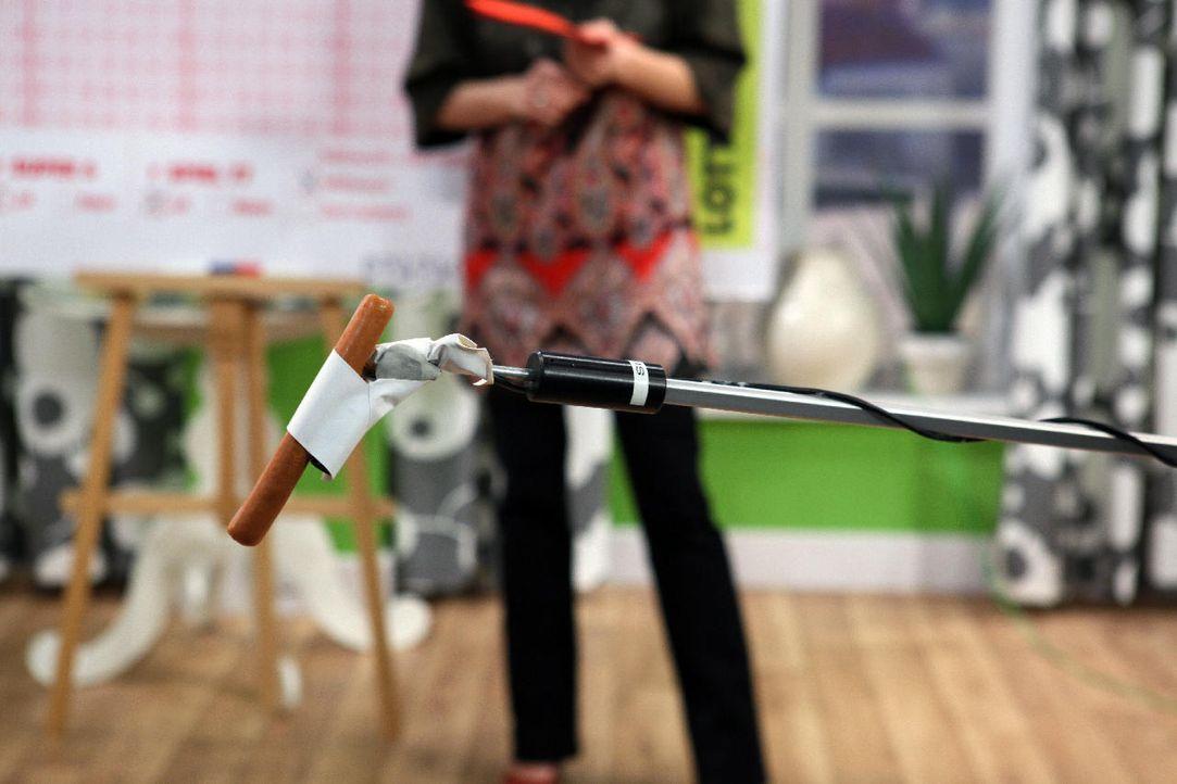 fruehstuecksfernsehen-studiohund-lotte-in-action-im-studio-089 - Bildquelle: Ingo Gauss