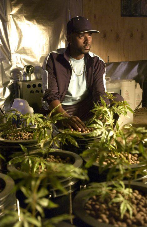 Conrad (Romany Malco) muss mit entsetzten feststellen, dass Andy aus Angst einige Pflanzen bepisst hat ... - Bildquelle: Lions Gate Television