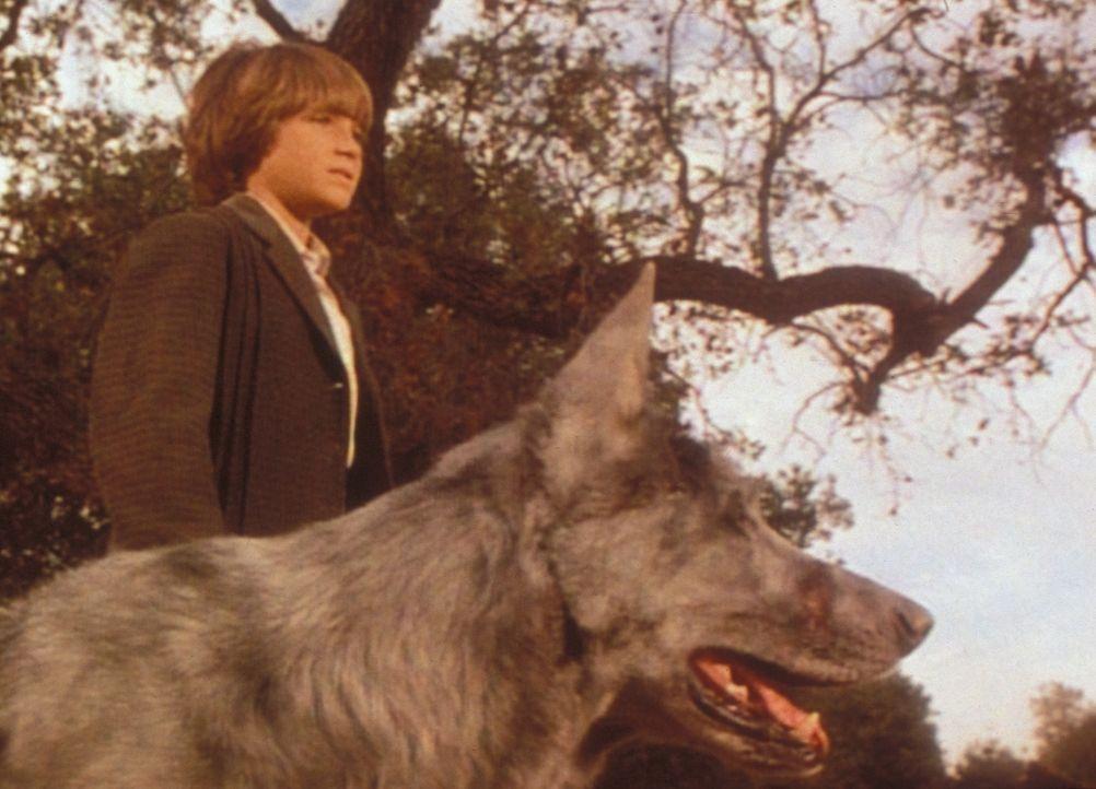 James (Jason Bateman) hat sich mit einem wilden und gefährlichen Hund angefreundet ... - Bildquelle: Worldvision