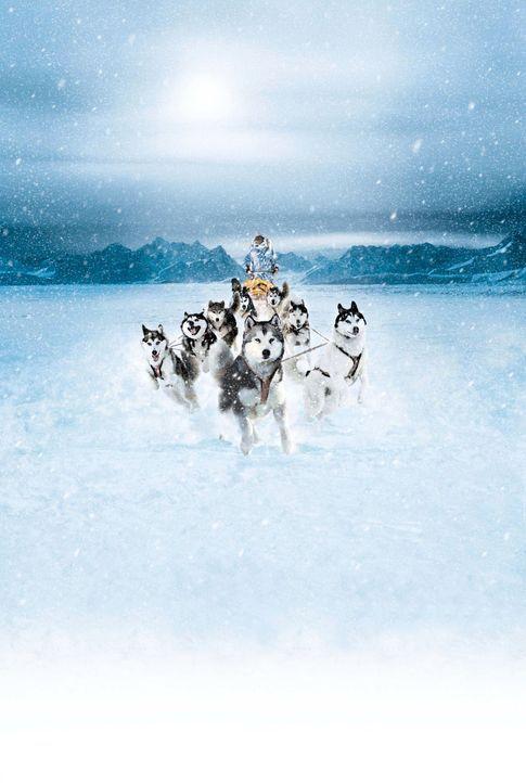 ANTARCTICA - GEFANGEN IM EIS - mit Paul Walker - Bildquelle: Chris Large Walt Disney Pictures. All rights reserved.