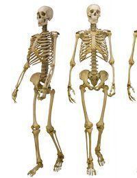 Sie wollen ein Skelett basteln, wissen aber nicht, wie Sie die Äste arrangier...