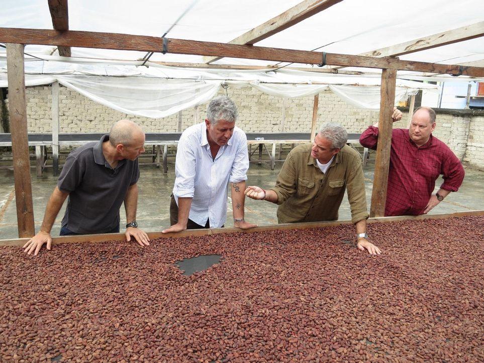 In Peru macht sich Anthony Bourdain (2.v.l.) zusammen mit seinem Freund Eric Ripert (2.v.r.) auf die Suche nach dem besten Kakao der Welt, der eine... - Bildquelle: 2013 Cable News Network, Inc. A TimeWarner Company. All rights reserved.
