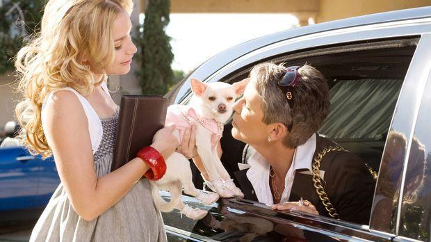 Beverly Hills Chihuahua - Chloe (M.) ist eine verwöhnte Chihuahua-Dame, die i...