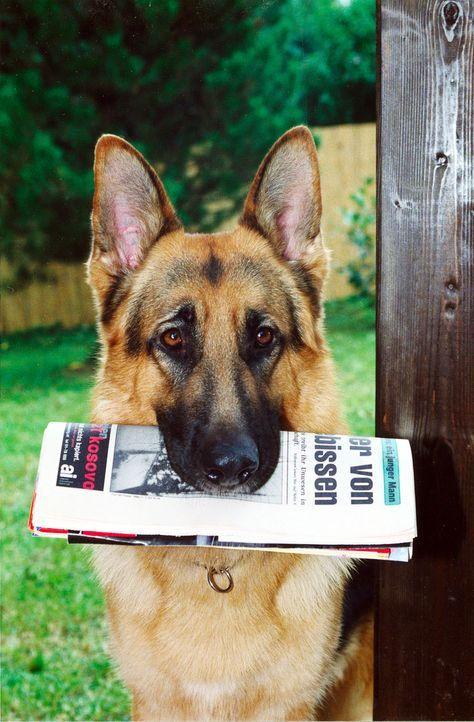 Rex holt die Morgenzeitung.
