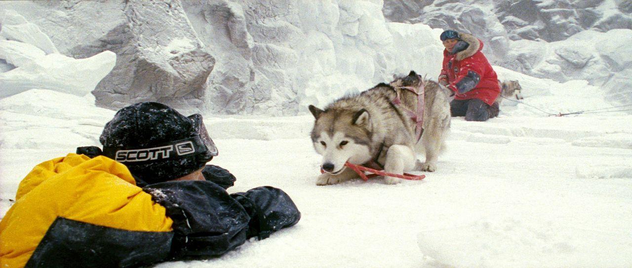 Als Davis McClaren (Bruce Greenwood, l.) im Eis einbricht, gelingt es Jerry (Paul Walker, r.) seiner Leithündin Maya ein langes, starkes Seil mit e... - Bildquelle: Chris Large Walt Disney Pictures. All rights reserved.