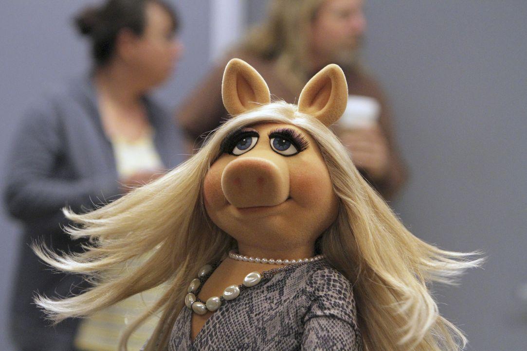 Geht mit der Crew feiern: Miss Piggy ... - Bildquelle: Andrea McCallin ABC Studios