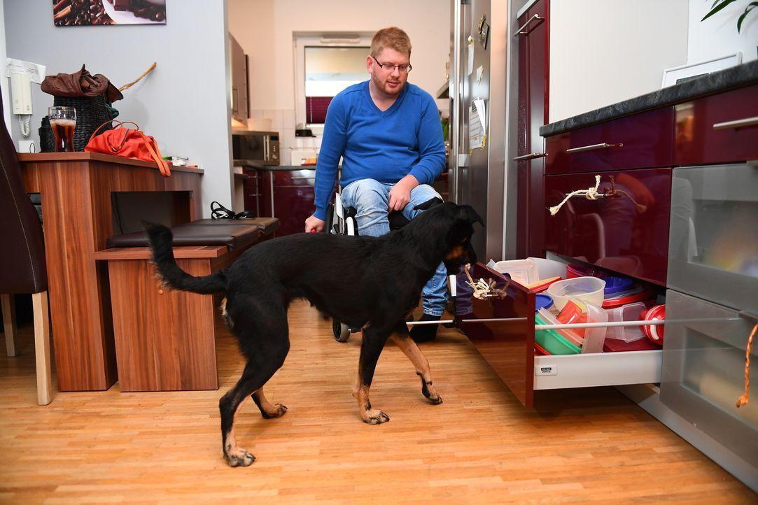 Nachdem Marcel (Foto) aufgrund eines Gendefekts seit einigen Jahren im Rollstuhl sitzt, will er solange wie möglich selbstständig bleiben. Mischling... - Bildquelle: Willi Weber SAT.1