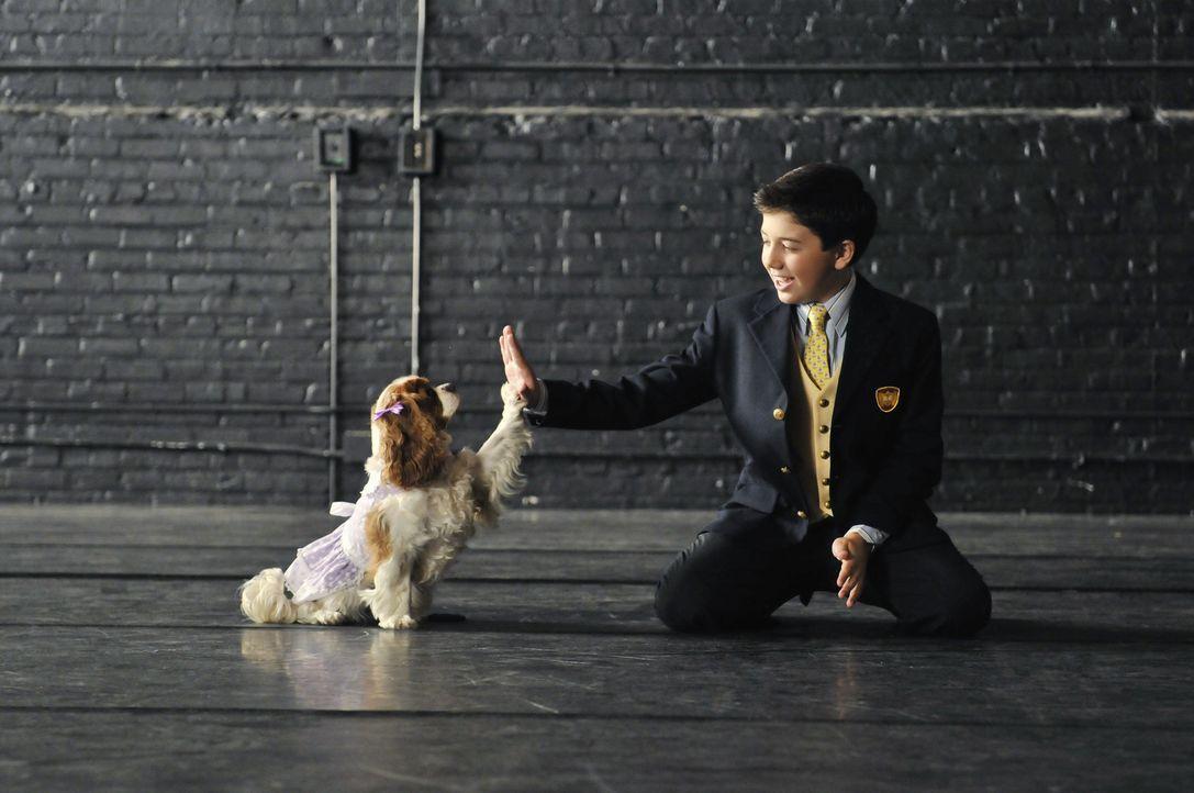 Hat eine süße und begabte Hündin, die bereits Broadway-Erfahrung hat: Roger (Bradley Steven Perry) ... - Bildquelle: 2010 Disney Enterprises, Inc. All rights reserved.