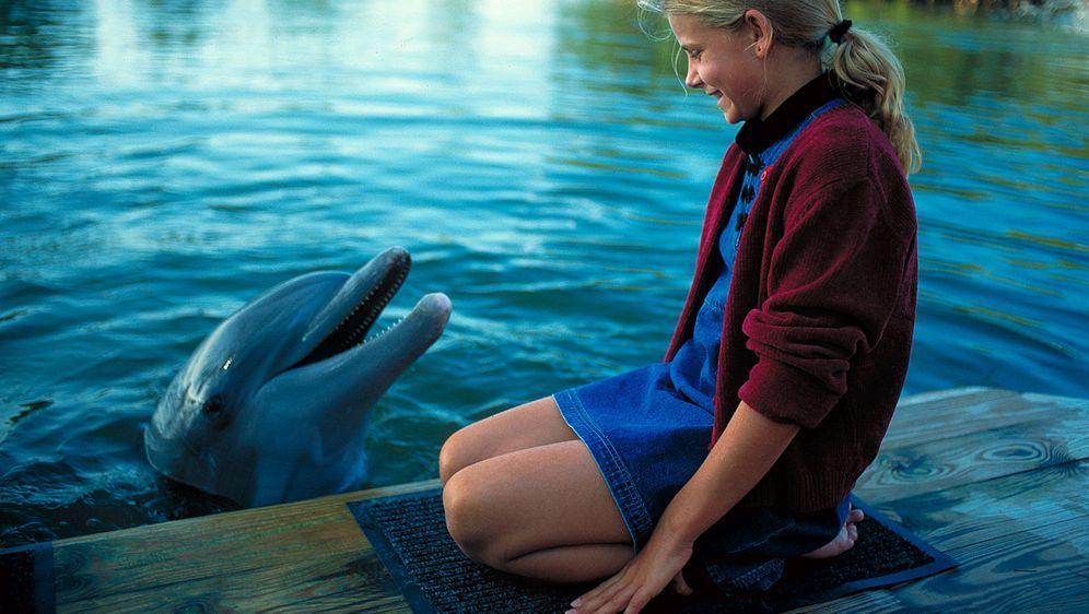 Das Delphinwunder - Bildquelle: Leslie Haslam ProSieben