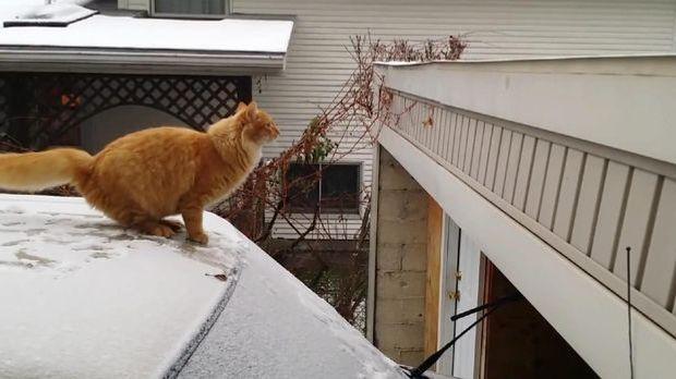 Fail Physik - Katzensprung